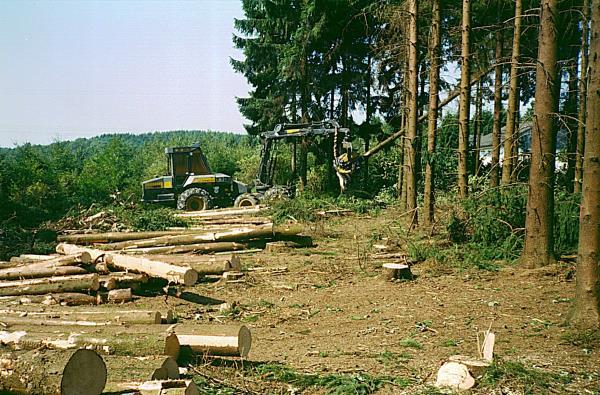 Holz-7a