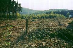 Holz-1a